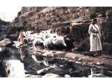 The main duties of a shepherd were to lead his flocks to green pastures and to find them a safe drinking-place by fresh water. An early photograph.